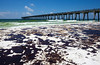 BP Oil Spill - Pensacola Beach : Some images I've taken of the BP Oil Spill's fallout on Pensacola Beach.
