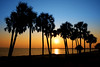 Going Coastal : Talk about a picture postcard place to live. The Gulf Coast of Florida is just amazing. These images are mostly about the sand, surf and sky that play together here.